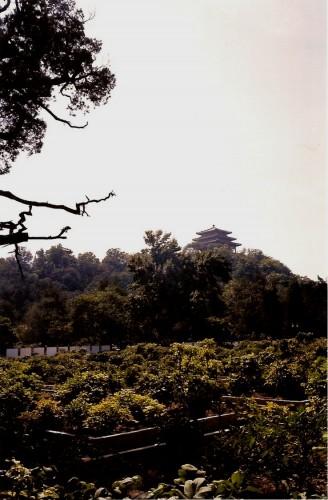 arbrebeijing.jpg
